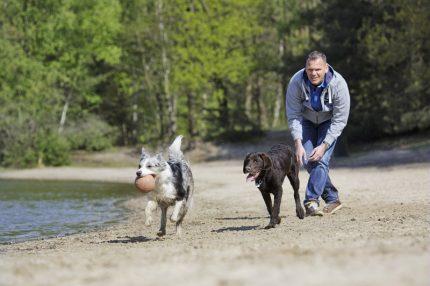 Honden op de Kempervennen