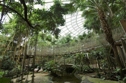 Jungle Dome op het Heijderbos